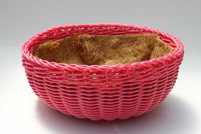 DIY Succulent Garden in a Basket
