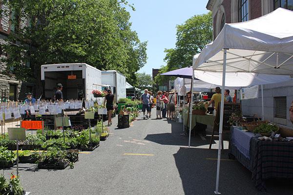 Northampton, MA farmers' market