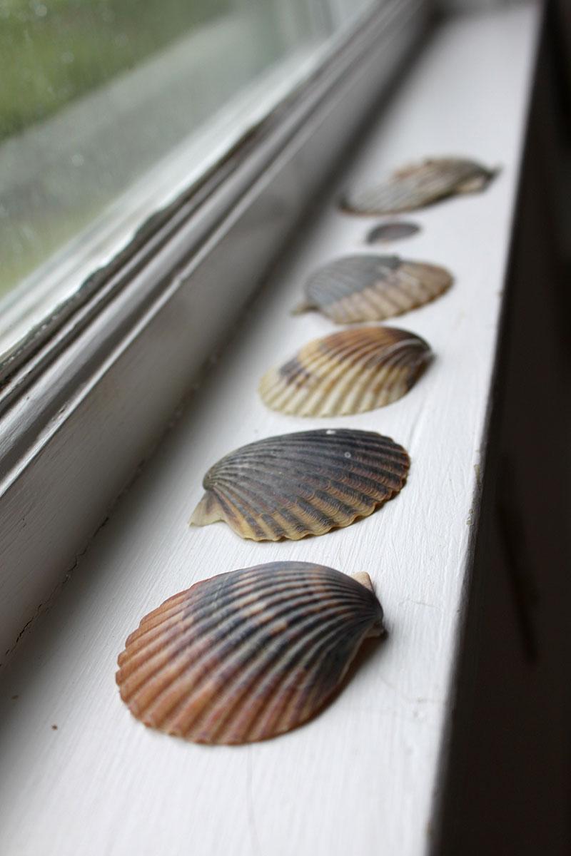 Seashells on the windowsill